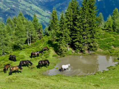 Waltraud Georgiades Visionssuche Steiermark